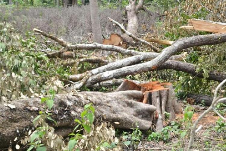Forest official suspended in Kodagu for allowing 800 trees to be axed