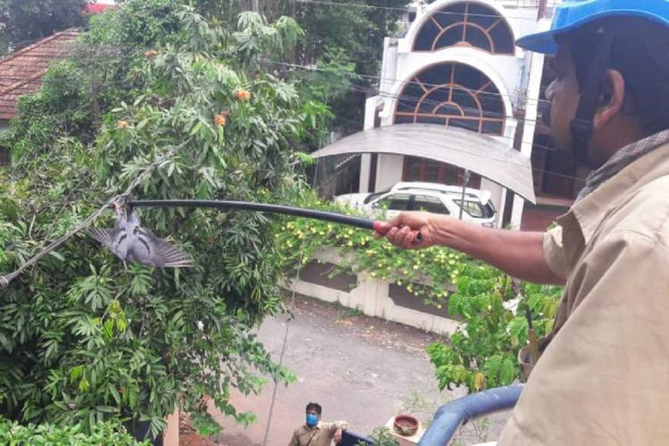 KSEB men rescuing a pigeon stuck on an electric line