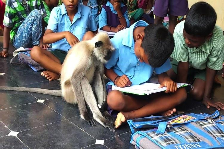 Meet Lakshmi the langur most sincere student in a govt school in Andhra Pradesh