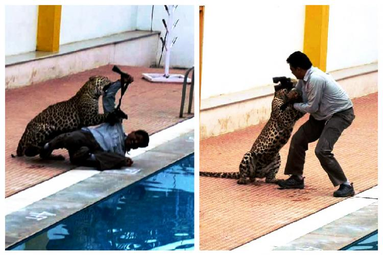 Bengaluru leopard incident 3 charts tell you why some neighbourhoods are vulnerable