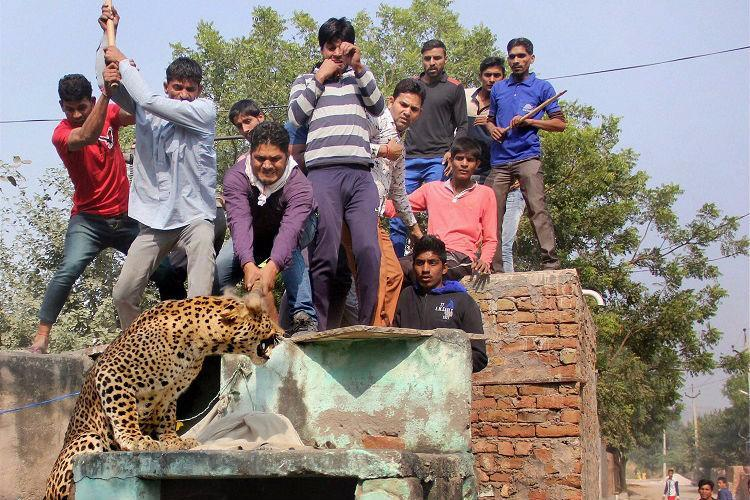 In 48 hours a leopard a tigress an elephant killed in separate incidents
