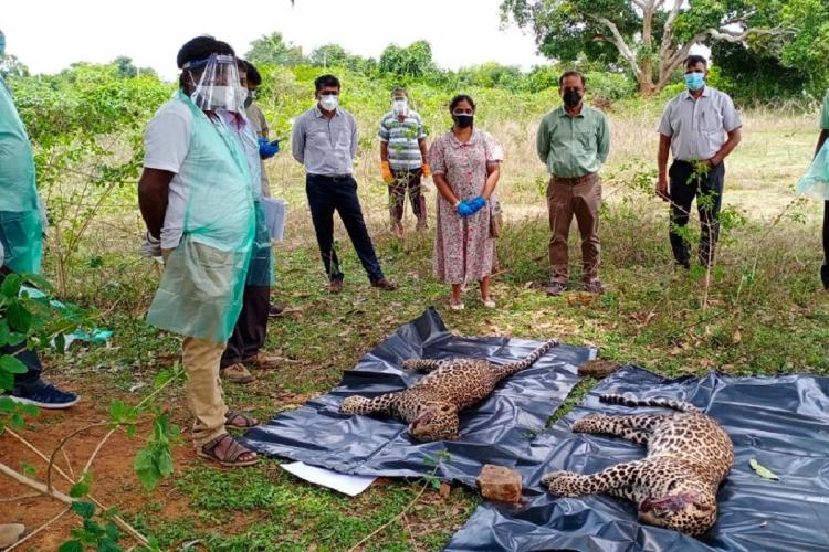 Leopard killed in Mysuru