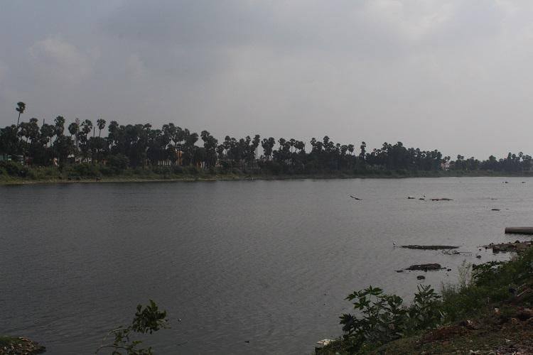 Days after fish deaths Chennais Madipakkam lake breathes easy again
