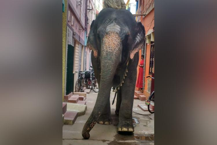 Elephant used for begging and marriage parades in Madurai to be rescued