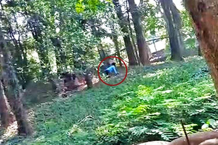 Man Jumps Into Lion Enclosure at Zoo to 'Have a Chat'