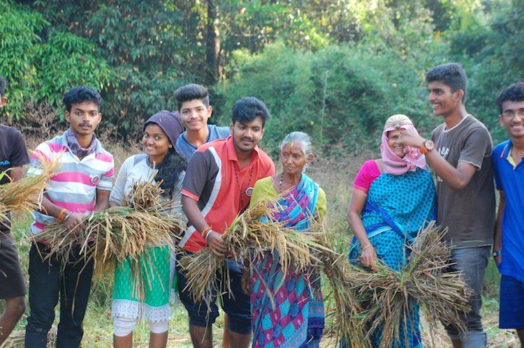 How a bunch of college students in Mangaluru cultivated rice for their own meals
