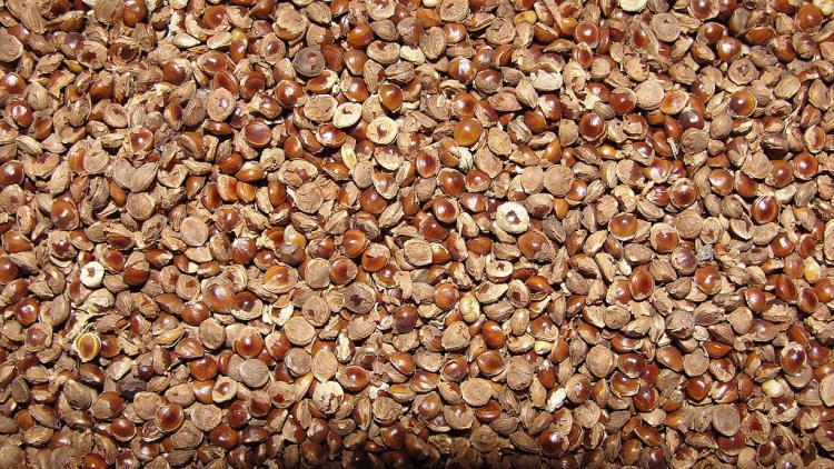 Ktaka govt lines up celebrity chefs to get you to eat more millets