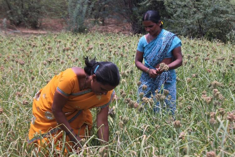 Allocate funds to help women affected by farmer suicides Activists urge Ktaka govt