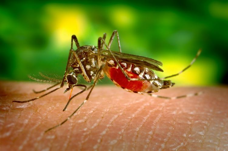Understanding dengue Prevention is the best option and it is not very difficult