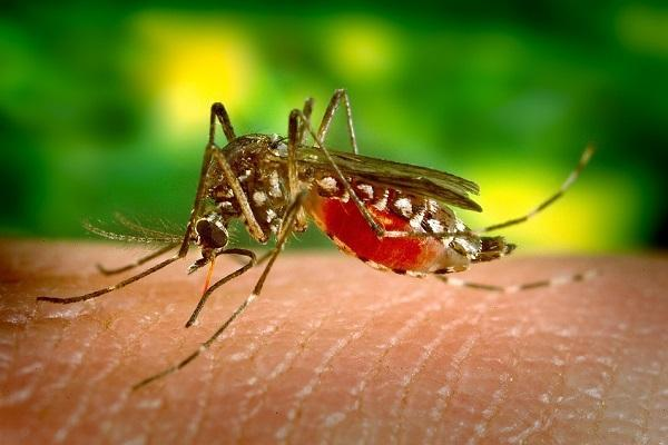 A vaccine that could block mosquitoes from transmitting malaria