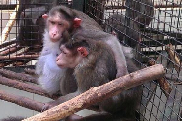 An acid attack turned her blind now Elizabeth the monkey needs your help to survive