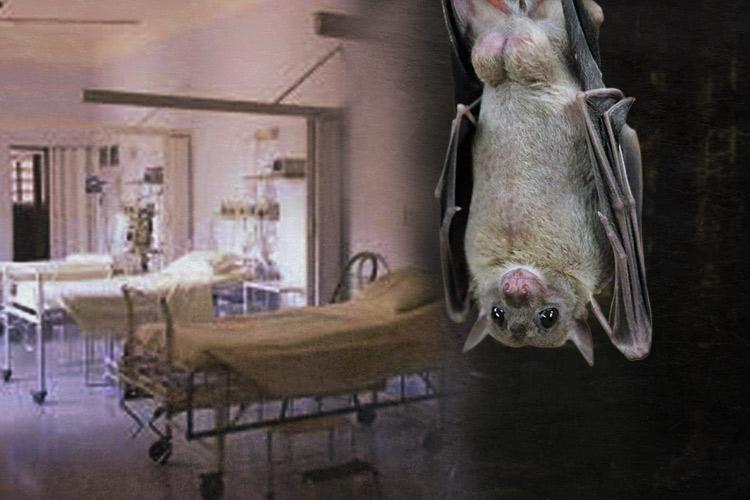 Nipah Virus First samples test negative officials yet to pinpoint source of outbreak