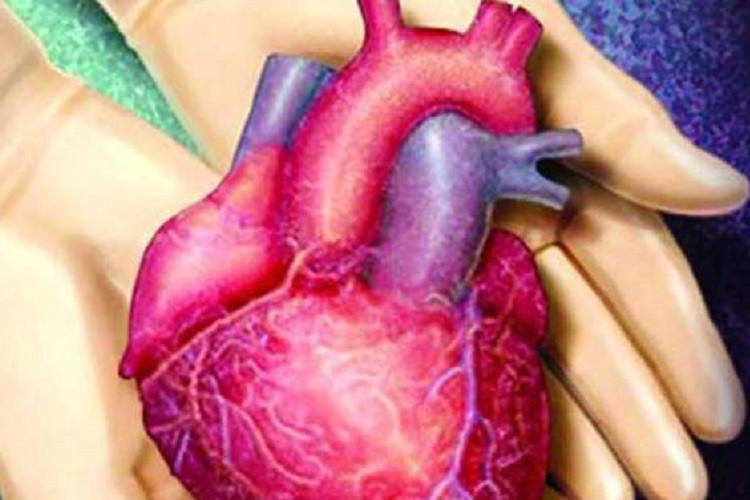Expert panel rules out organ trade allegation against TN organ donation authority