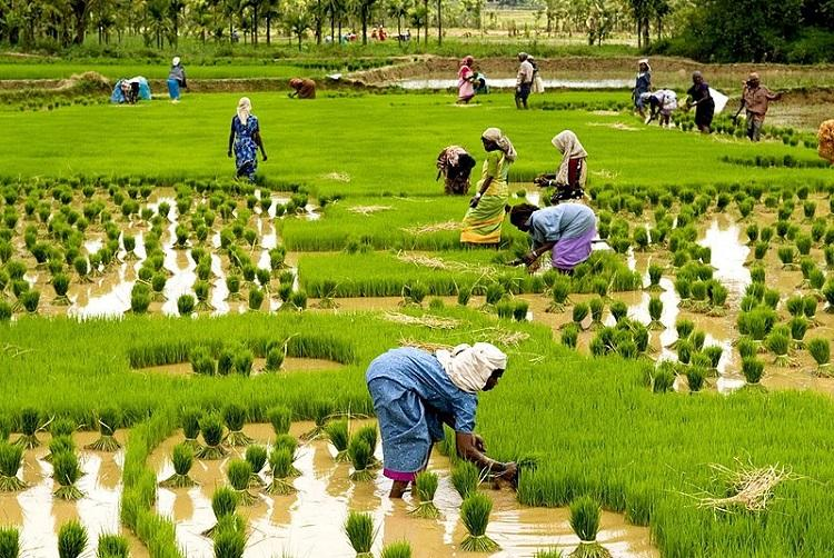 Paves way for misuse Environmentalists slam proposed amendment to Kerala Paddy Act