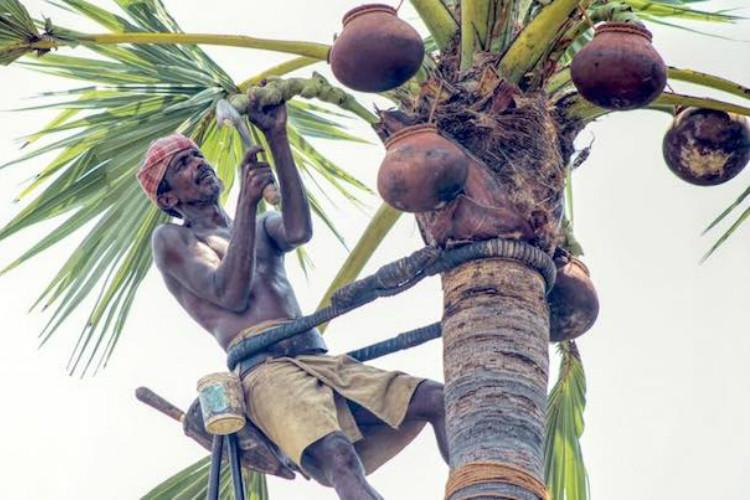 Why the future is looking up for palm tree climbers of Tamil Nadu