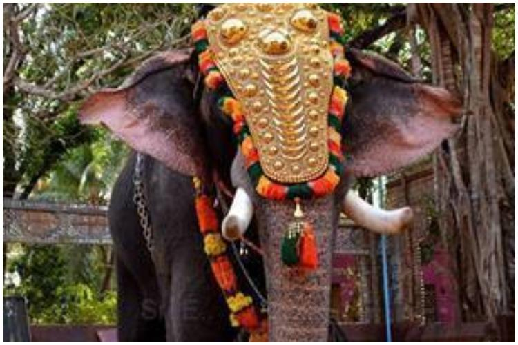 Keralas celebrated temple elephant Thiruvambadi Sivasundar passes away