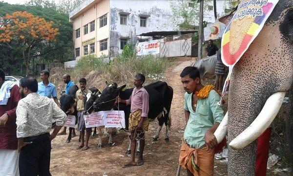 In Kerala thirsty cows and elephants are standing in protest against a village panchayat