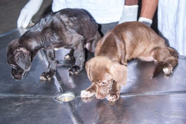 Two puppies smuggled in sealed container miraculously survive China to Chennai journey