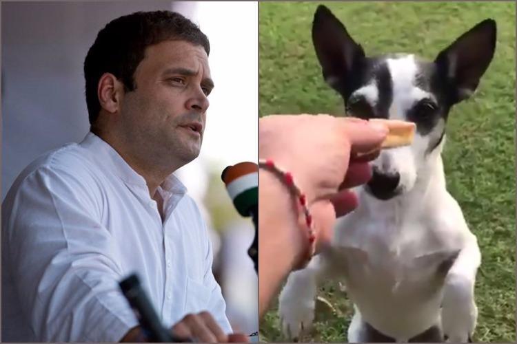 Rahul Gandhis dog declares it tweets for him