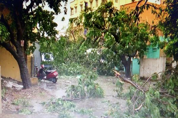 Rains in Kerala claim one life Woman dies after tree collapses on her