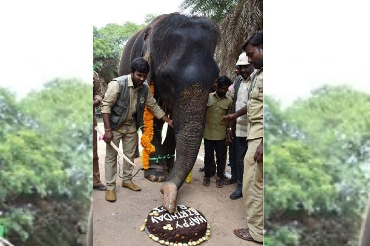 Saw Photo Of An Elephant Cutting A Cake Meet Rani Hyd Zoo S Oldest