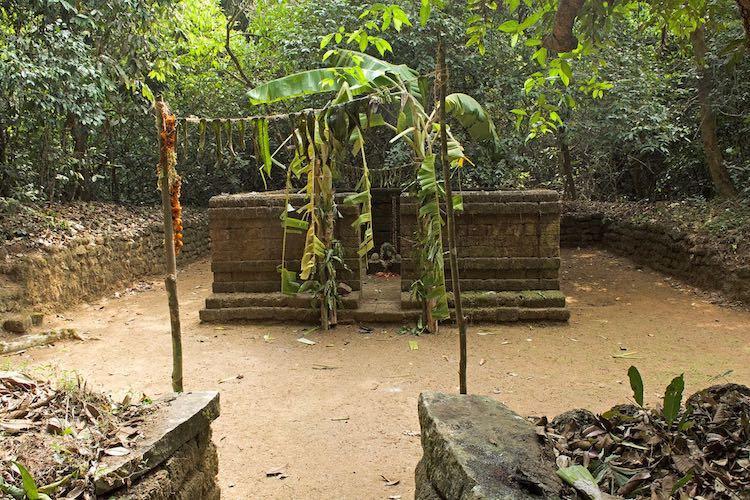 Sacred groves of Kodagu How faith is helping conserve Karnatakas protected forests
