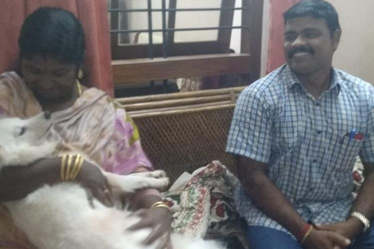 Pomeranian abandoned for illicit relationship gets new home in Kerala