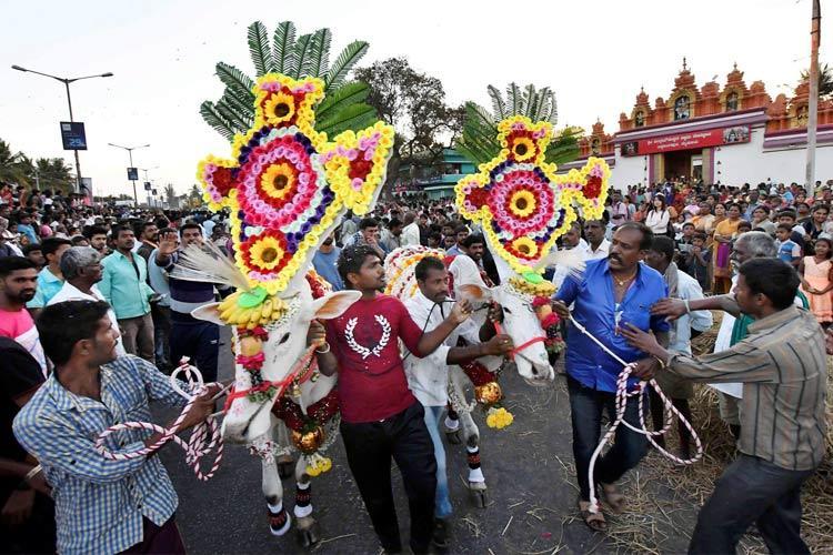 Festive spirit across Karnataka as state celebrates Sankranti harvest festival