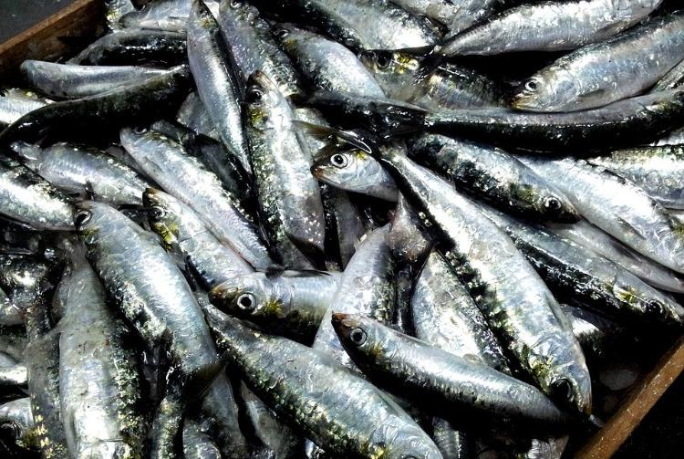 Budget neglected us Keralas sardine fishermen allege as catch on the decline