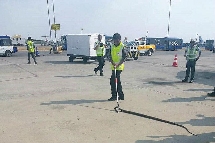 Ticketless traveler gives Hyderabad airport a scare Snake found on aircraft landing gear