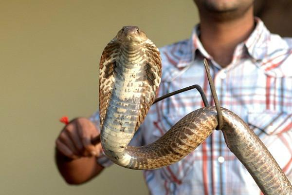 BBMP has its hands full with snakes-rescue missions this monsoon season