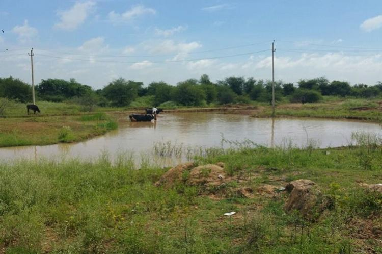 Lake buffer zones in Bengaluru Activists accuse govt of siding with errant builders