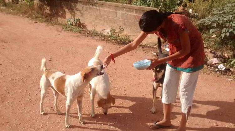 Viciously attacked for sheltering dogs Bengaluru woman narrates her ordeal