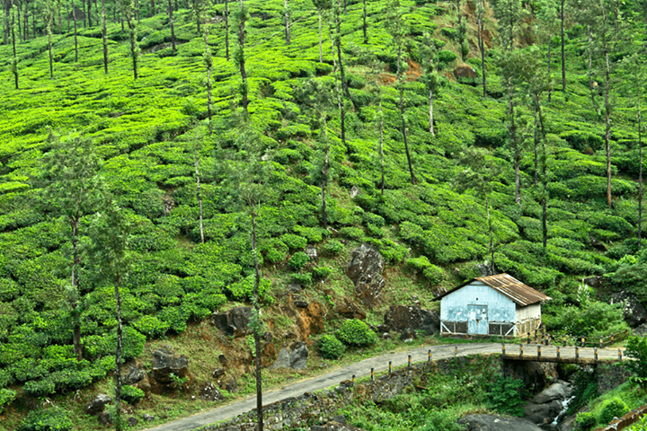 Keralas Wayanad has much to be proud of ranked among best accommodations in the world