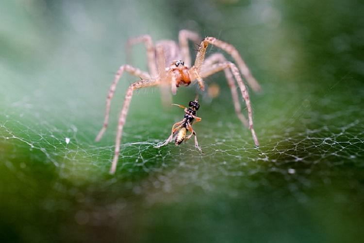 Spiders are more prolific predators than whales