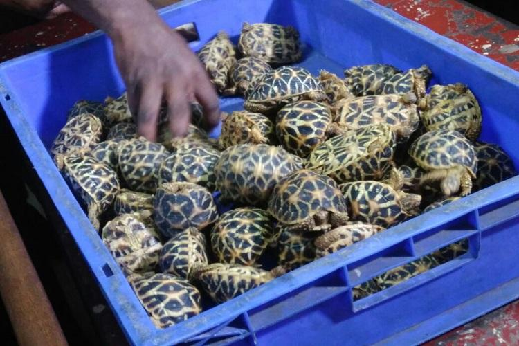 150 star tortoises seized from unidentified man at Chennai Central station