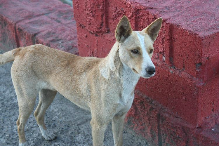Lethal injections used to allegedly kill 40 stray dogs in
