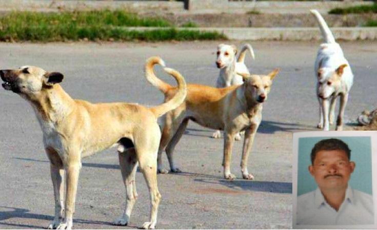 Kerala fisherman mauled by pack of dogs near Thiruvananthapuram succumbs