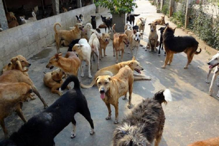 Hyderabad to have designated spots for feeding stray dogs soon RWAs to be consulted