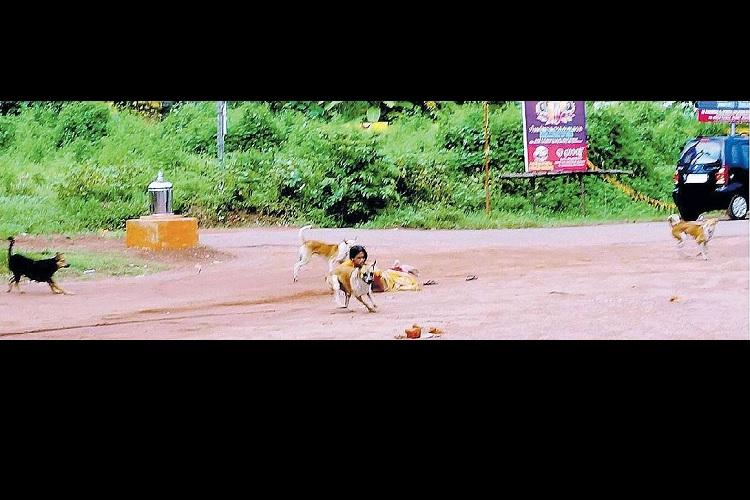 The truth behind Malayala Manoramas scary photo of stray dogs attacking a woman