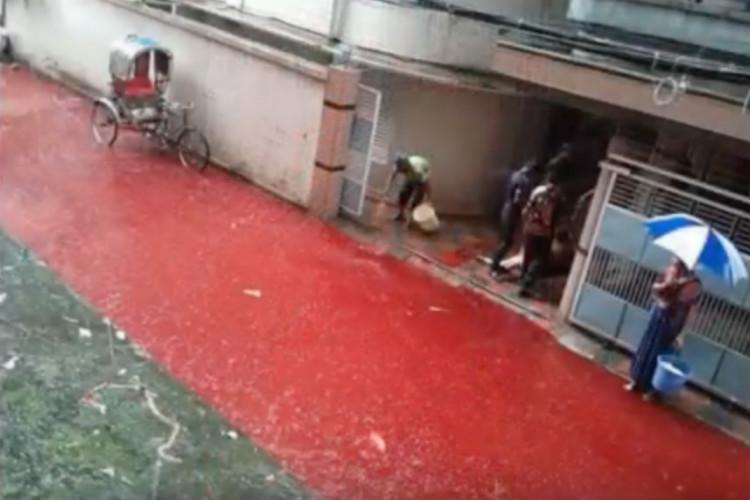 Eid animal sacrifice Blood-rainwater mix on Dhaka streets raises health concerns