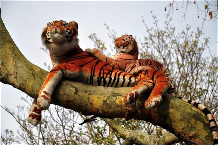 After 45-minute standoff to capture tiger UK cops find out its a stuffed toy