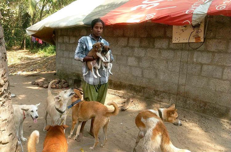 Meet the Kerala couple who opened up their two-room hut to 14 stray dogs