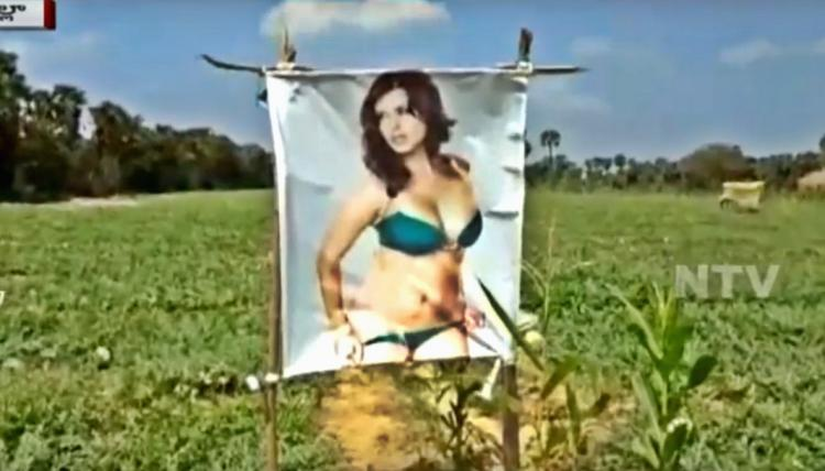 Whats Sunny Leone doing in an Andhra farm Warding off the evil eye
