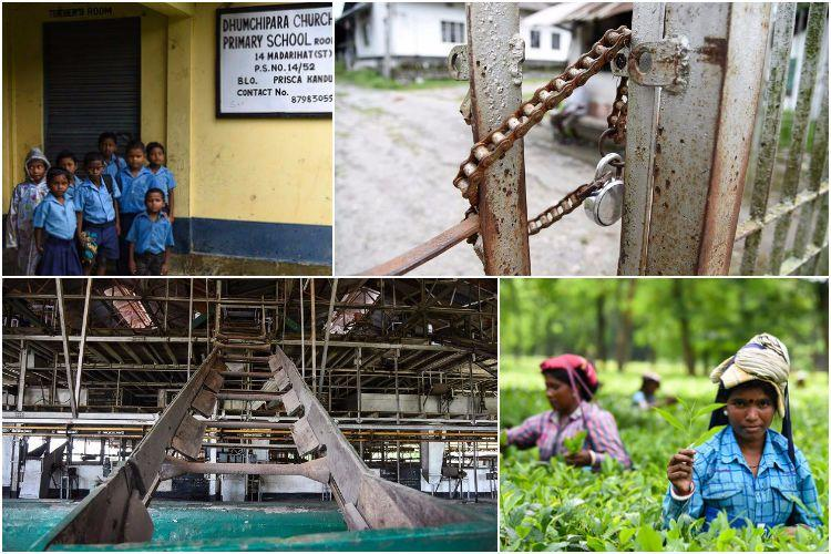 Photo feature Duncans closed tea gardens in Bengal Poverty malnutrition prostitution plague workers