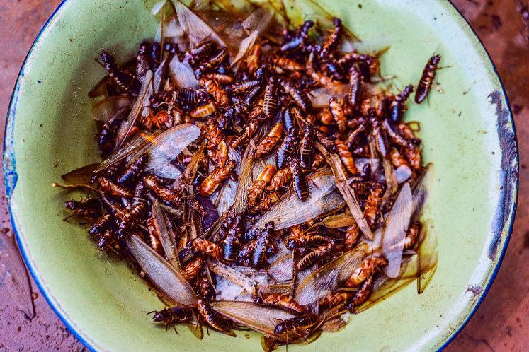 Winged termites are yummy The day my ayah taught me to respect whats on anothers plate