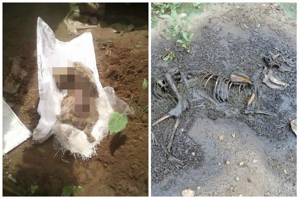 Dogs poisoned and their bodies dumped in Peechi Canal in Thrissur