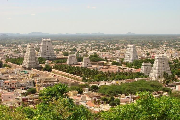Denying nature to the divine Tiruvannamalai protests against cutting trees to broaden Girivalam