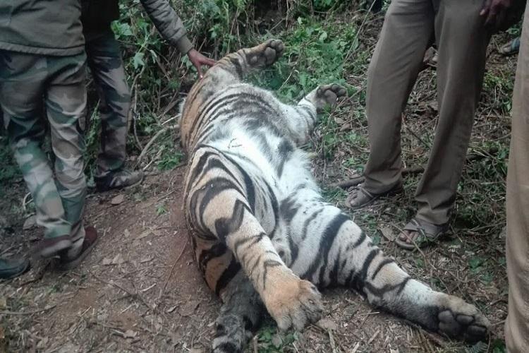 Tiger found dead in Kodaikanal cause of death under investigation