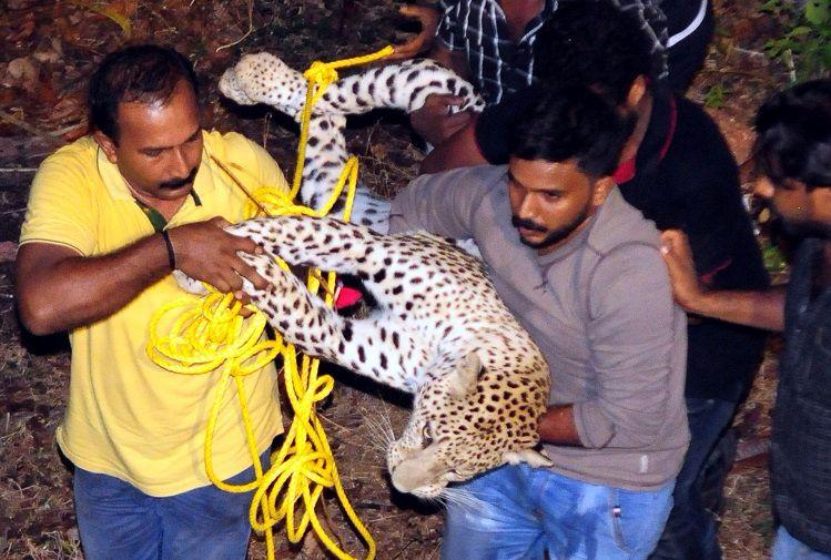 A leopard kept Kannur on the edge for hours where did it come from